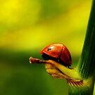 A Very Green Perch  by sammythor