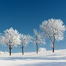 Frosty Trees on a clear Winter day by Jeff Hathaway