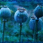 Andrea's Blue Poppies by Sandra Foster