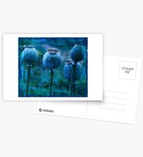 Andrea's Blue Poppies Postcards