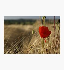 Flower among the Weeds Photographic Print