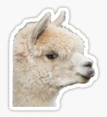 Alpaca llama Sticker