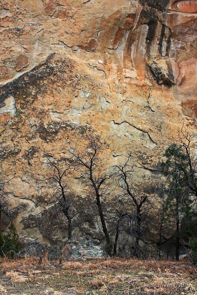 Trio of Trees by Julia Washburn
