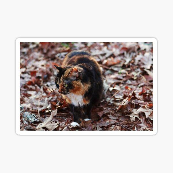 Camo Kitty Sticker