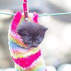 Cat in sock by Lanii  Douglas