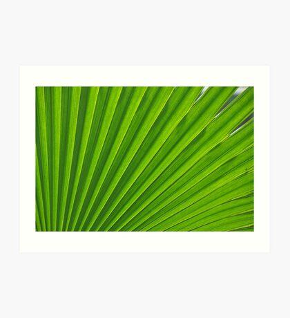 fresh green leaf Art Print