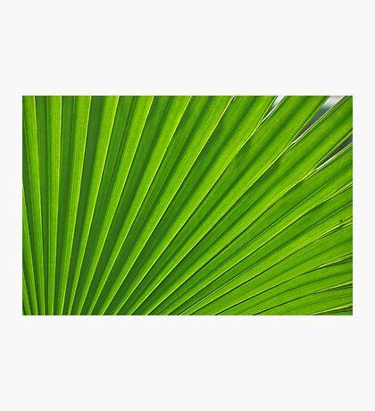 fresh green leaf Photographic Print