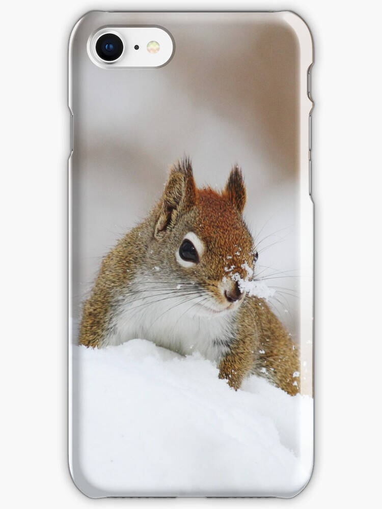Red Squirrel - iPhone Case by Alinka