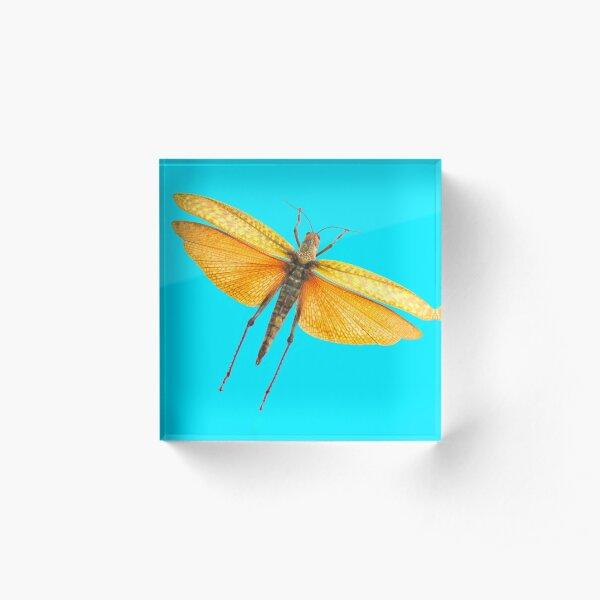 Locust Blue Acrylic Block
