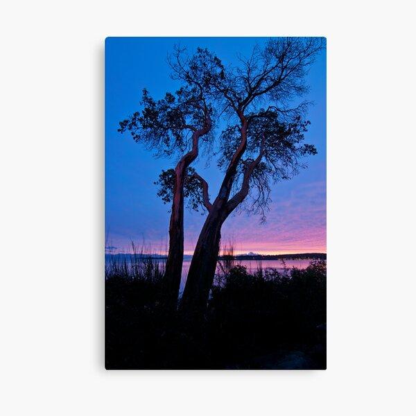 Arbutus Tree at Sunrise Canvas Print