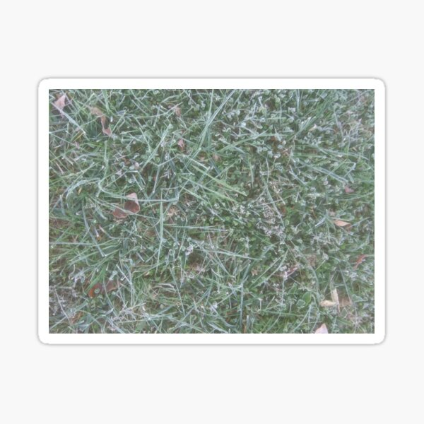 Frosted Fescue and Clover Sticker