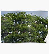 Cranes Nesting. Poster