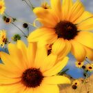 Sunflower Ipod case by Gene Praag