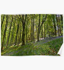 Dorset Spring,  Poster