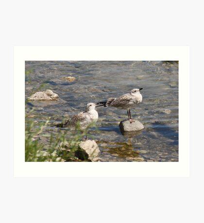 Seagulls Sunning Art Print