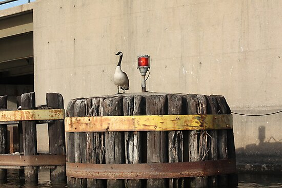 Goose on Barge Bumper by Thomas Murphy
