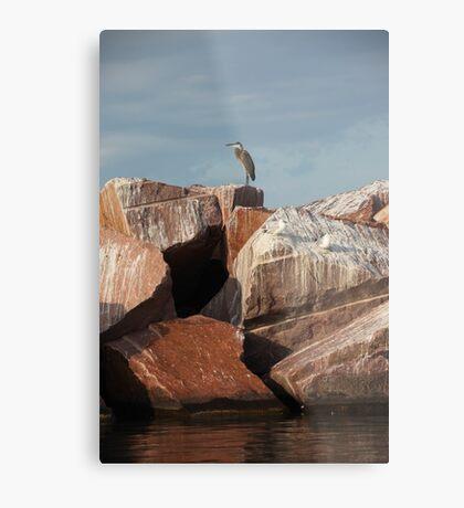 Great Blue Heron on Red Rock Metal Print