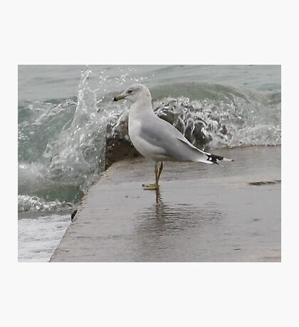 Seagull on end of pier. Photographic Print