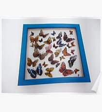 British Butterfly Collection Poster