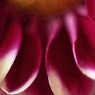 A Final Purple by sammythor