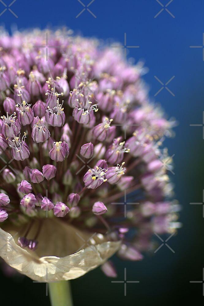 Garlic Flower by Joy Watson