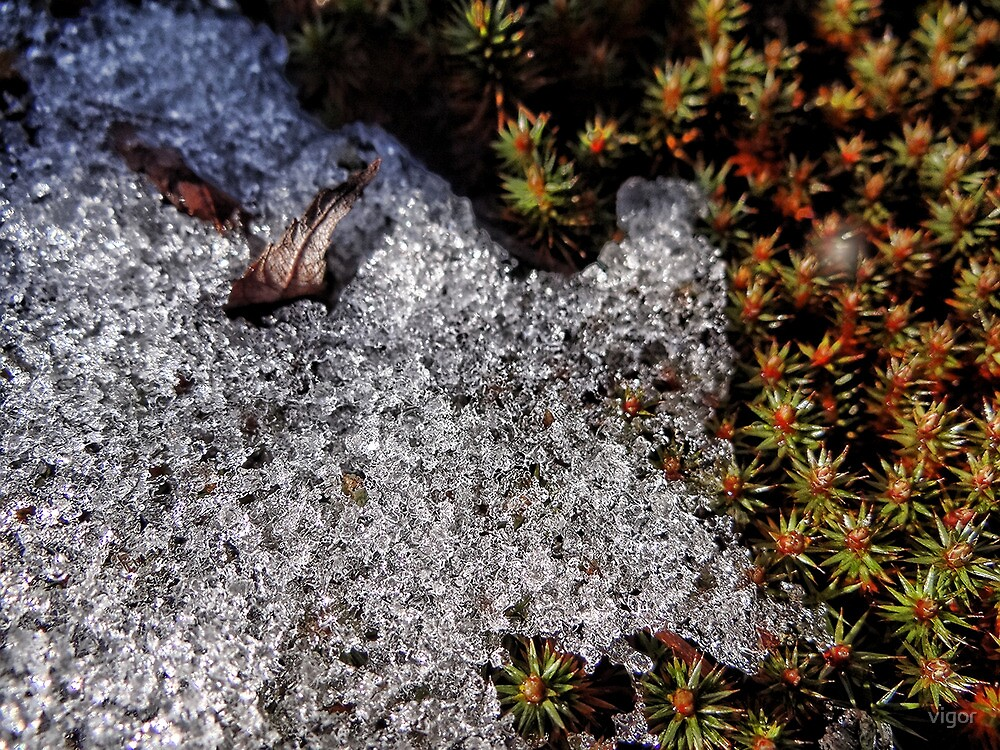 Ice crystals on green by vigor