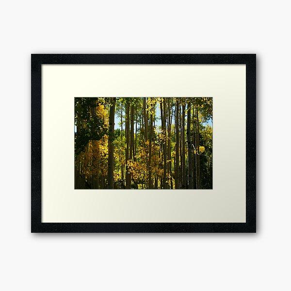 Aspen Trees in Telluride Framed Art Print