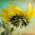 Petals 'N' Points by KBritt