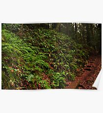 Fern Grotto Poster