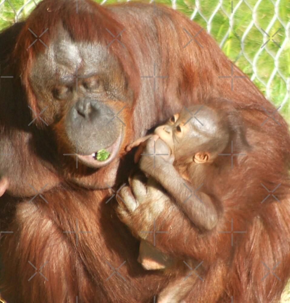 Orangutan, smartest ape by loiteke