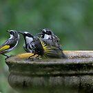 Bathtime  by byronbackyard
