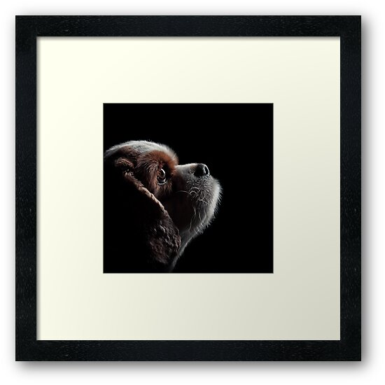 Pet Profile by SD Smart