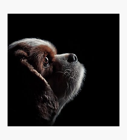 Pet Profile Photographic Print