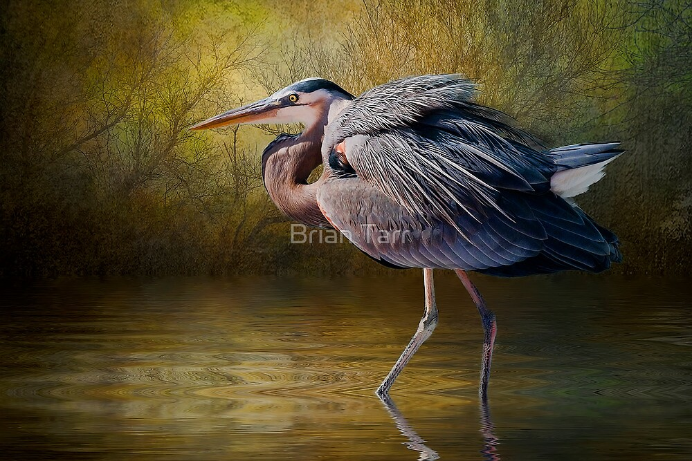 Heron Creek by Brian Tarr