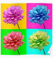 Dahlia Brightly Coloured Wall Art Poster