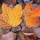 Simply Autumn by Bill Spengler