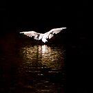Night Flight by andonsea