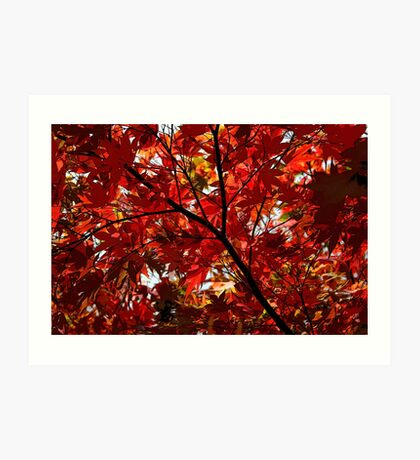 Shades Of Autumn Art Print