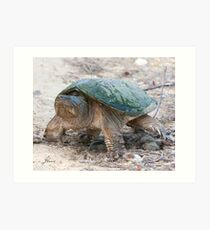 A Momentary Glace - Snapping Turtle Art Print