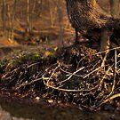 Stump by Tim Wright