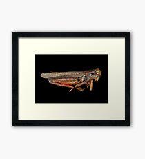 Science - Entomology - The specimin Framed Print