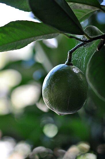 lime drop by Karen E Camilleri