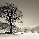 Langdale Tree by Brian Kerr