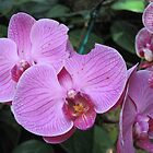 Passionate About Purple - Orchids by teresa731