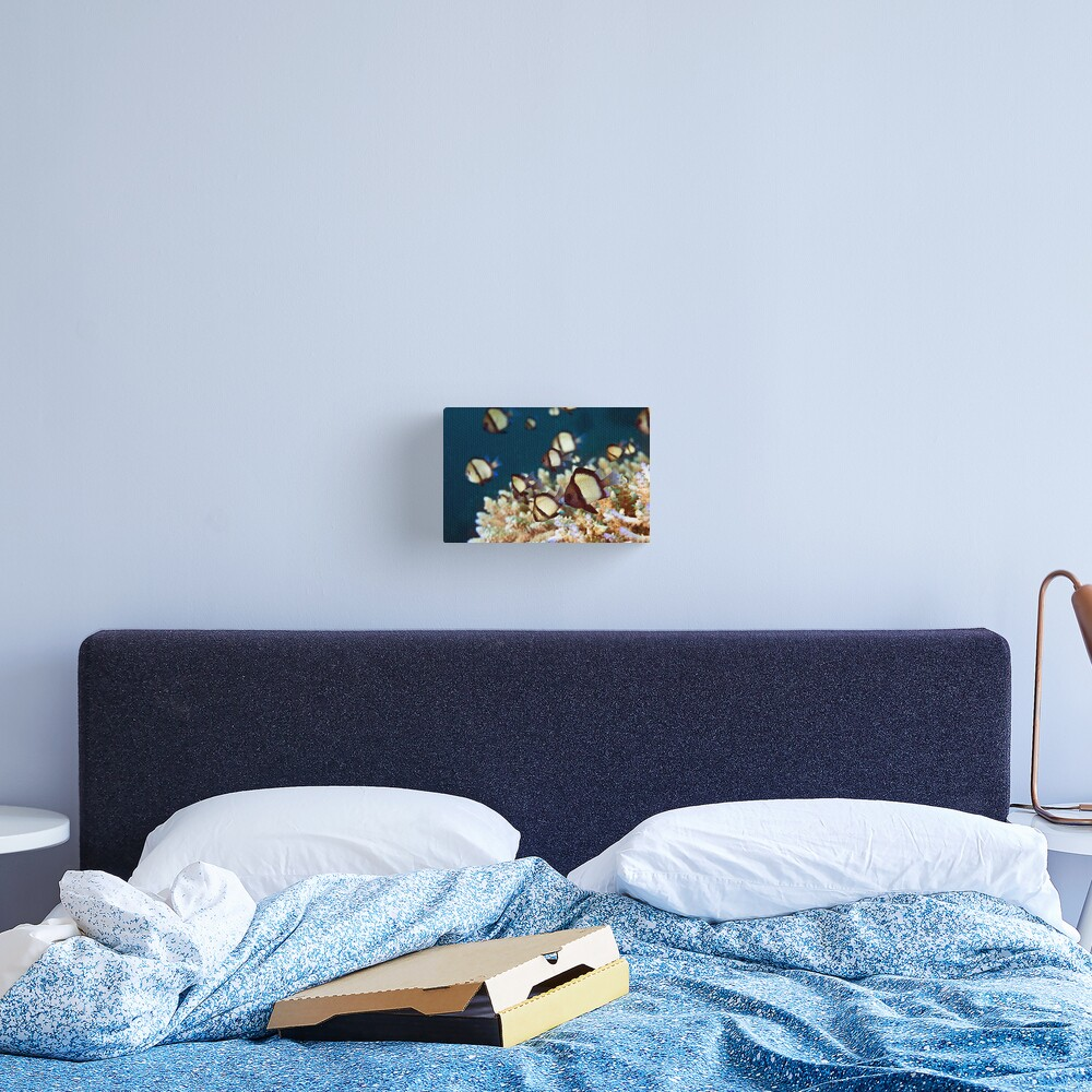 Humbug Canvas Print