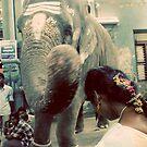 Ganesh's blessing by Lauren Tober