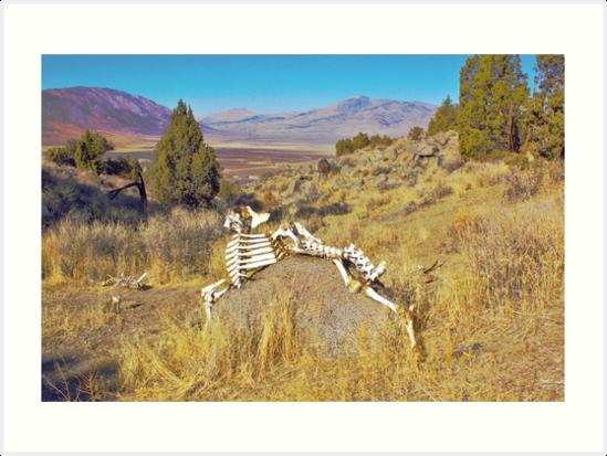 Bone Art by SB  Sullivan
