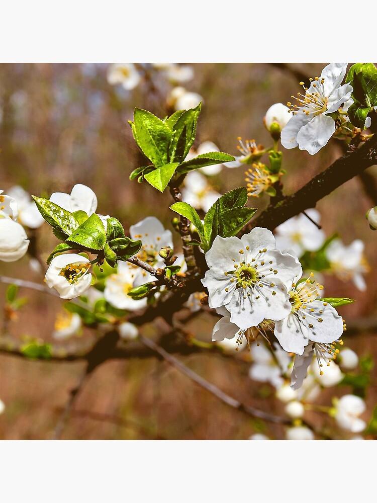 spring motif flower, plum flowers by Hujer