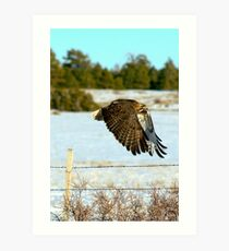 """Gently Soaring By"" Art Print"