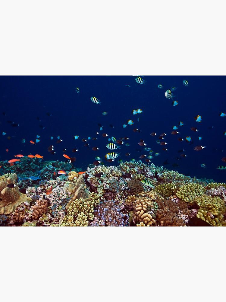 Reef edge by DavidWachenfeld